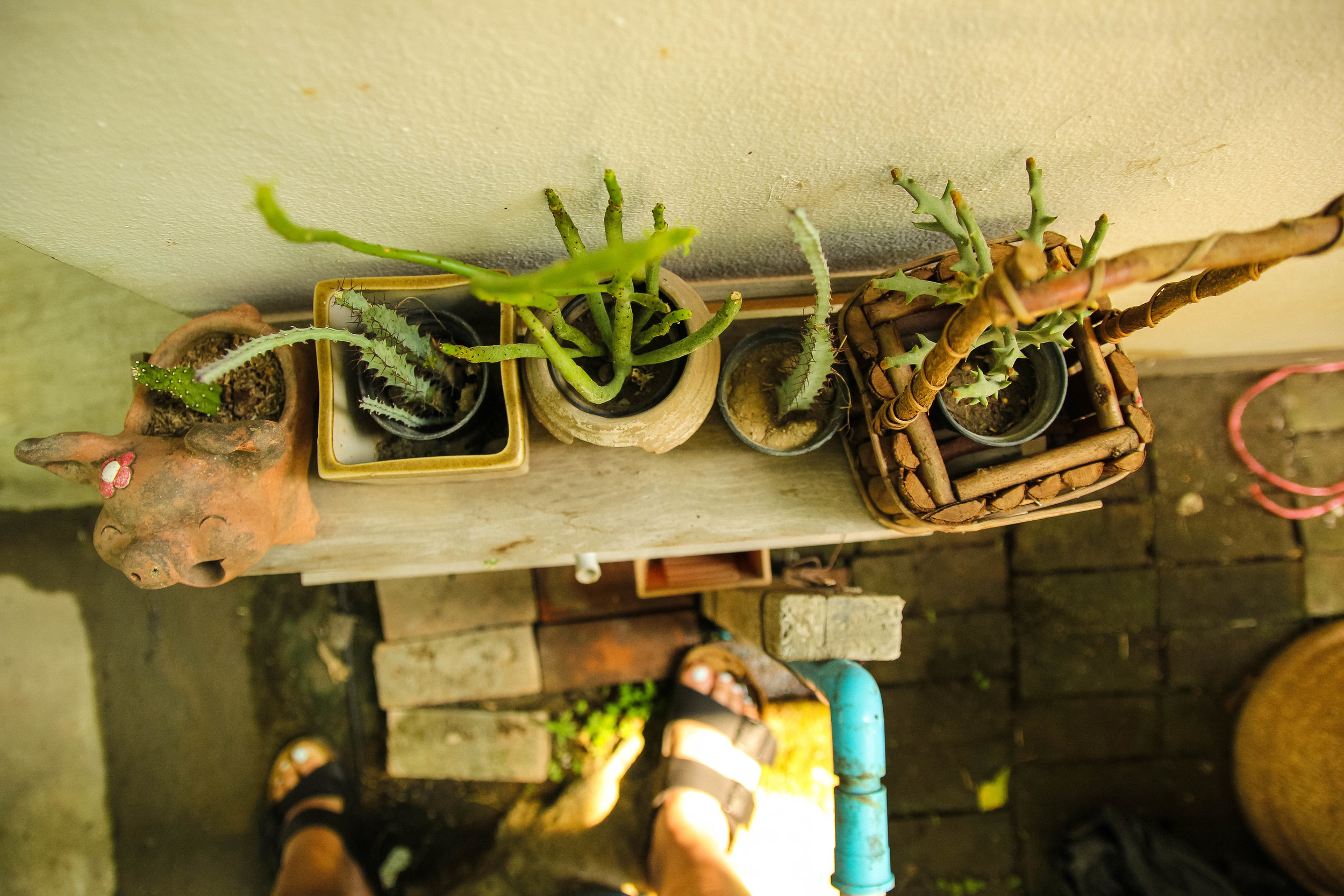 Chiang Mai Thailand Bay's Cafe cactus cacti birkenstocks