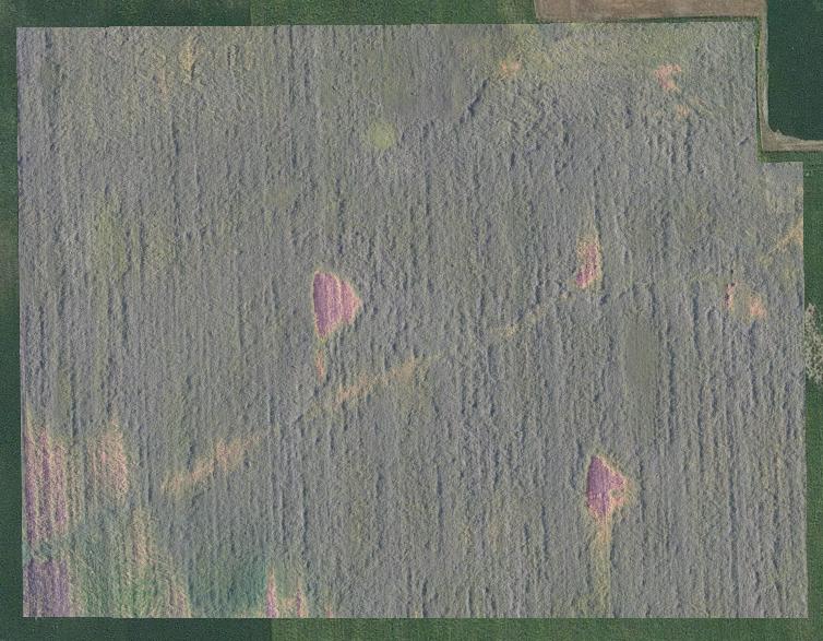Soybean field, early September 2016