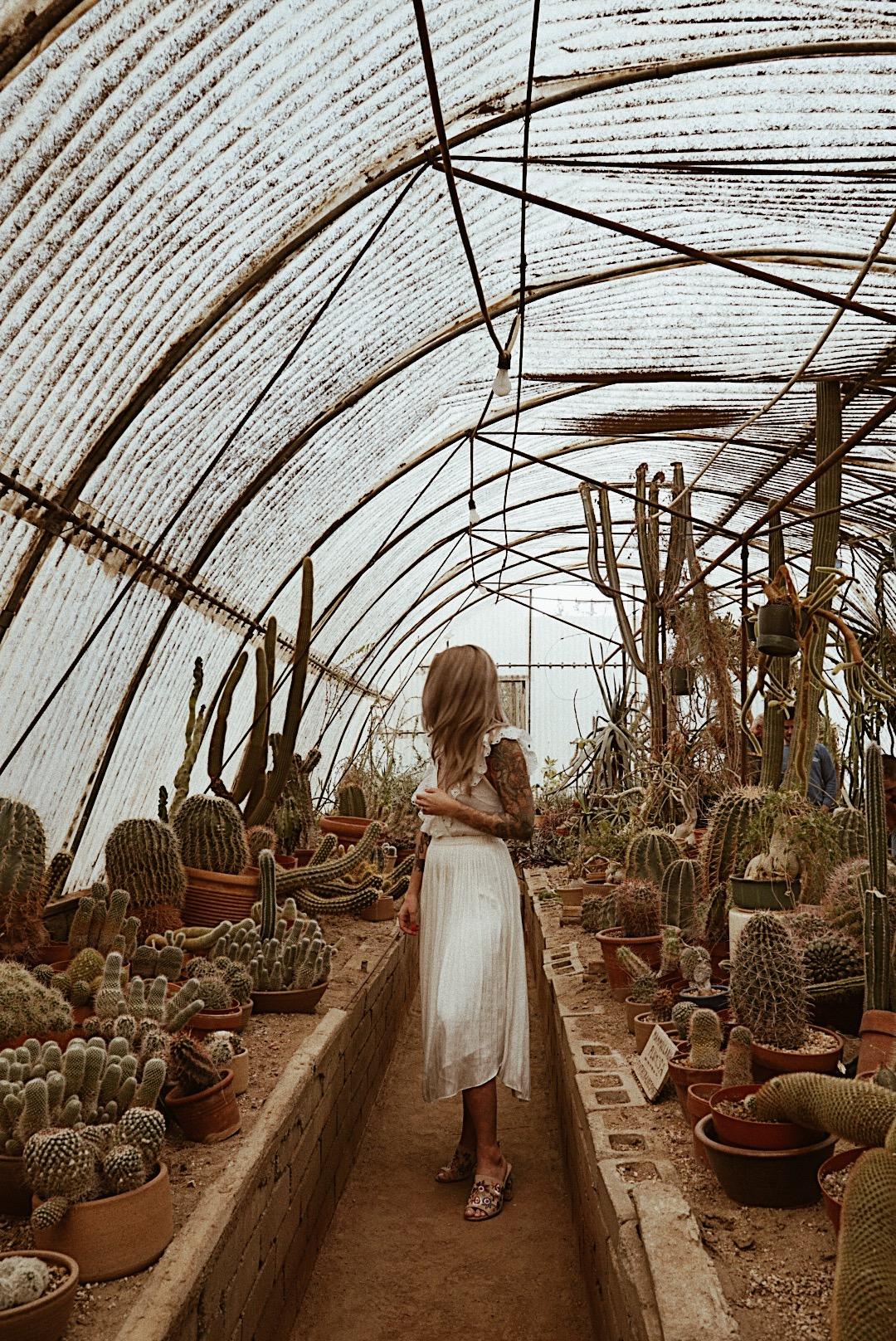 julia o test creative palm springs guide moorten botanical garden