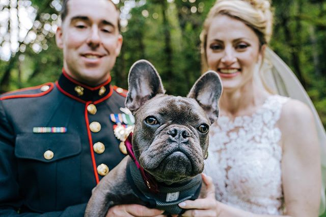 How can you not love this face? 😍 Congratulations to Catalina & Wes...and Walter too!  #ringbearer #brideandgroom #weddingphotography #oregonweddingphotographer #focalpointstudios #focalpointweddings #focalpointphotography #pnwweddings #weddingportrait #cutedogs #weddingdog #dogringbearer #silverfallsstatepark #silverfallsoregon #silverfallsweddings #silverfallslodge #artofweddingspdx #portlandbride #resourceweddings