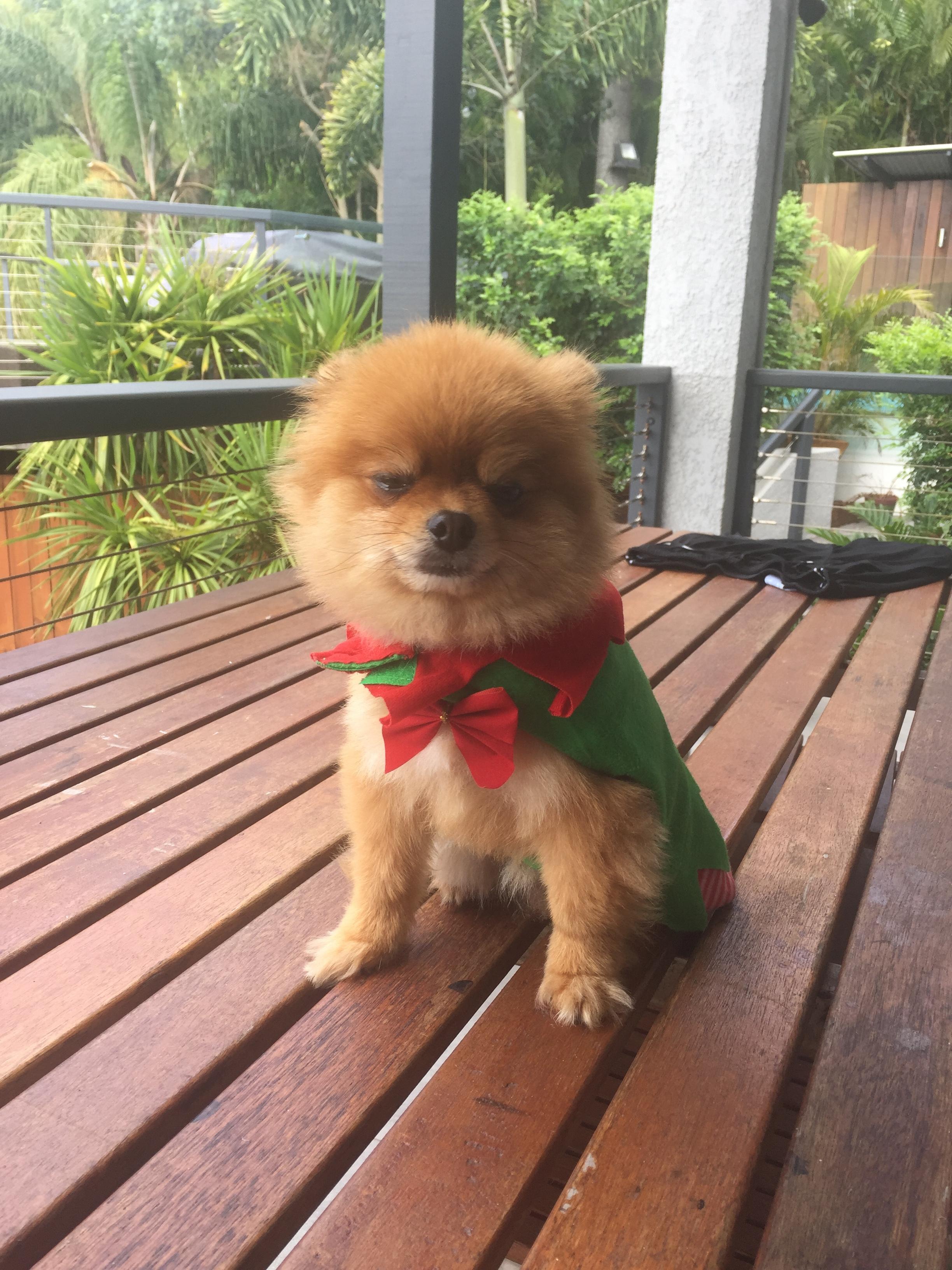 Teddy the grumpy Christmas elf.