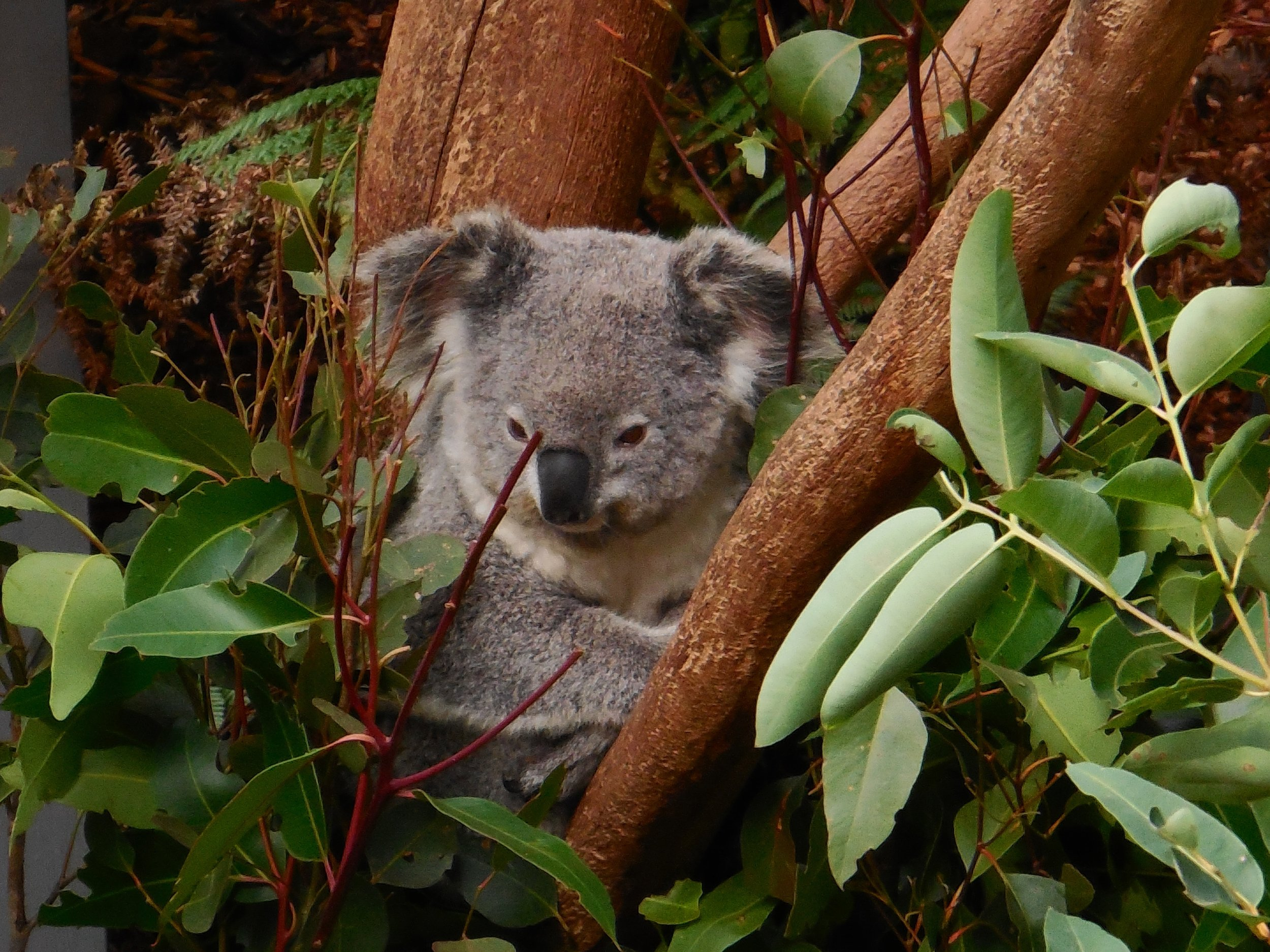 Currumbin Wildlife Sanctuary 10 things to do around the gold coast
