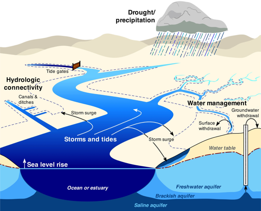 Figure 3. Diagram of a shallow coastal system undergoing saltwater intrusion.