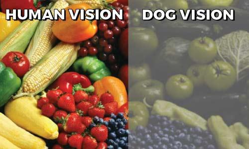 Human-V-Dog-Vision-w-title.jpg