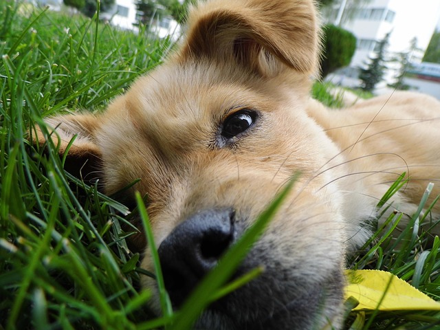 Stop-Dog-Urine-From-Killing-Grass.jpg