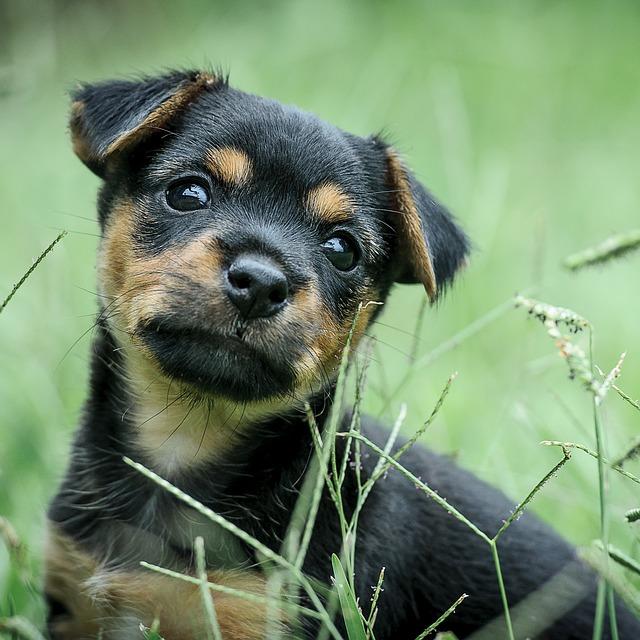 Happy-Dog-No-Lawn-Burn.jpg