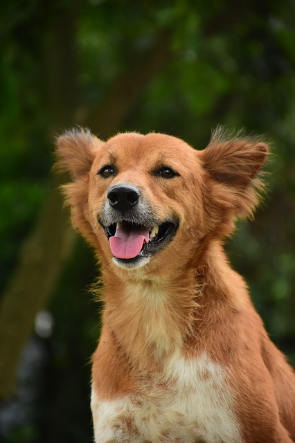 dog-3479122_640.jpg