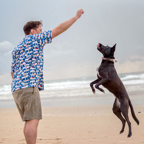 Jimi Wall,Canine Nutritionist (HATO) - Specialising in formulating nutritionally complete diets using whole foods.