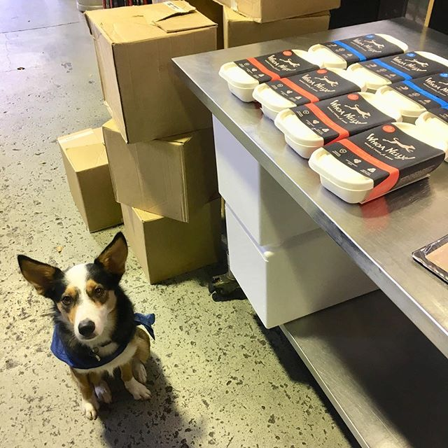 I had some help packing the truck this morning. Shout out to Reggie the @wanderingcooks wonder dog!! #dogsofbrisbane #rawfeddog #localbusiness #gooddog