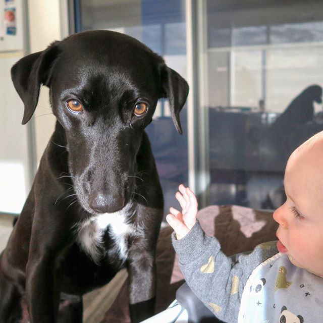 Kids that grow up with dogs are 50% less likely to suffer from allergies and asthma. Is there anything dogs can't do?? #lovedogs #dogsarelife #healthbenefits #healthiving