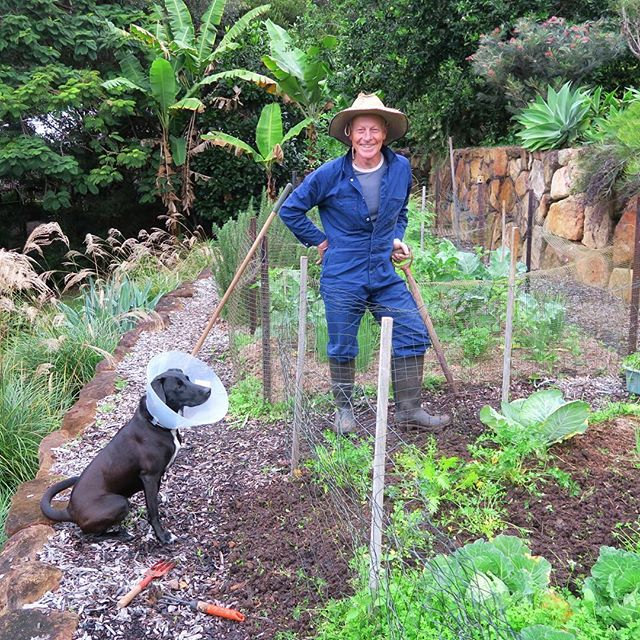 Say G'day to Farmer Dave! This legend (also Tory's Dad) grows our parsley on the lush hills of Doonan. No chemicals, no sprays, and lots of clean air and sunshine. It doesn't get more organic than this!! #organicproduce #rawfeddog #sunshinecoast #grateful #familybusiness