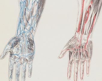 human heart red.jpg