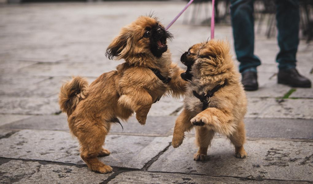 Perritos con correa en la calle