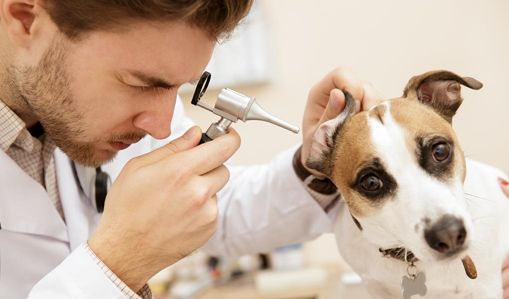 Veterinario revisando a perrito
