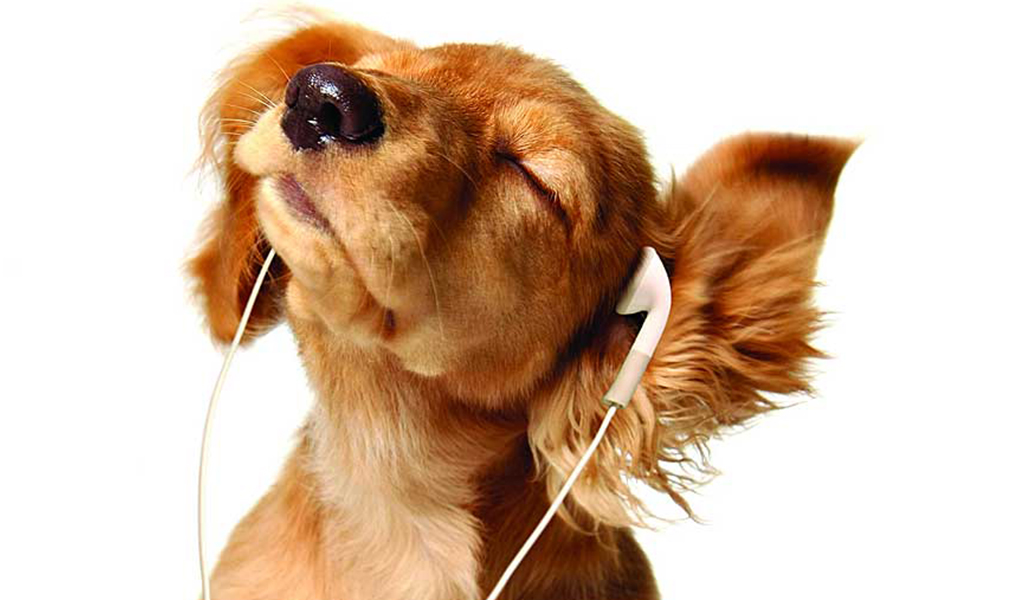 Perrito escuchando música