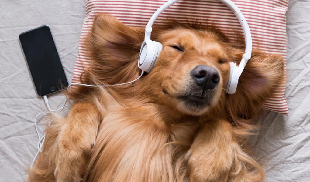 Perrito con audífonos
