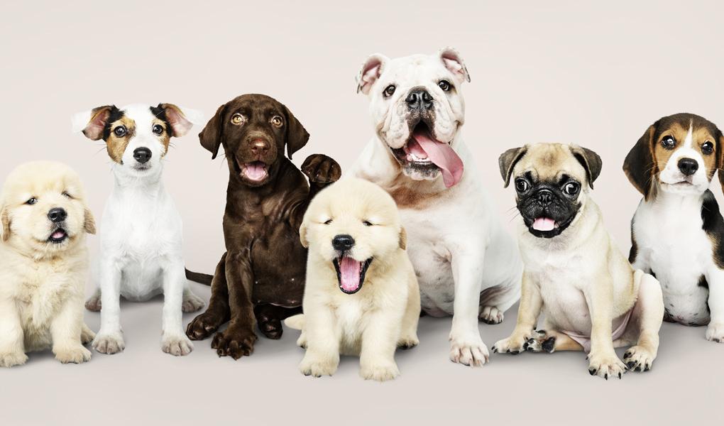 Grandes, medianos o pequeños… ¿Cuáles son las razas de perros favoritas en  México? — Animal Rest