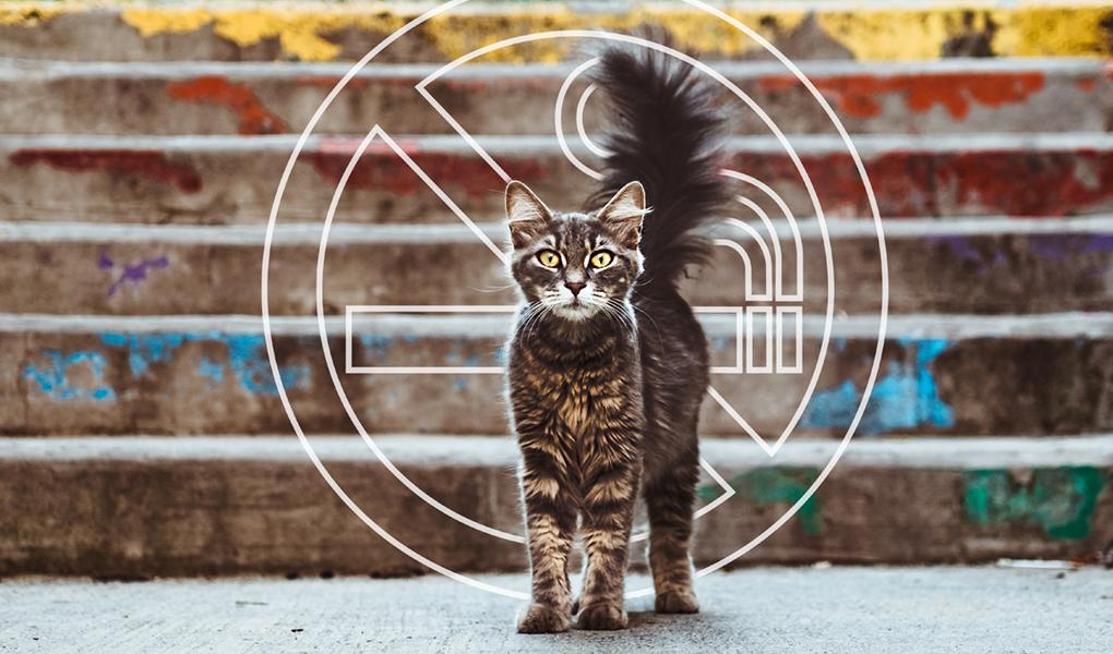 Gato y símbolo de no fumar