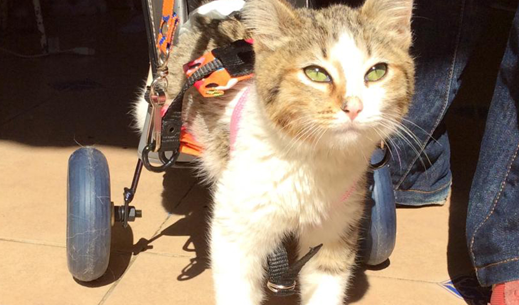 Silla de ruedas para gatito