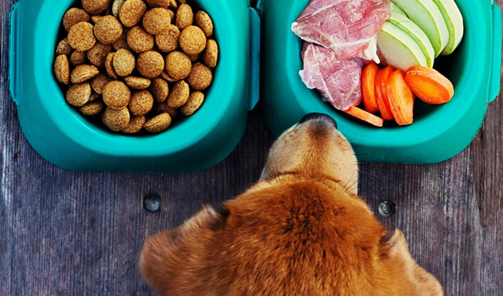 Comida saludable para mascota