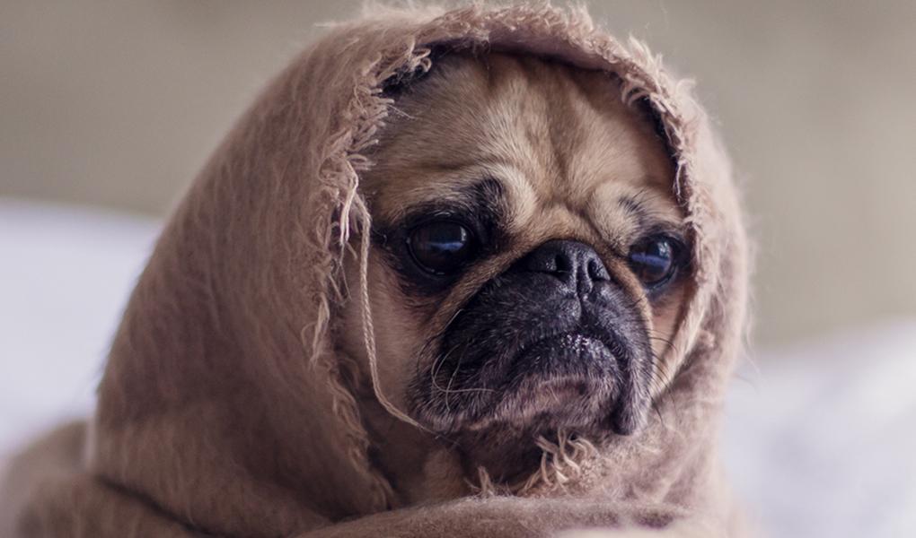 Perro con frío