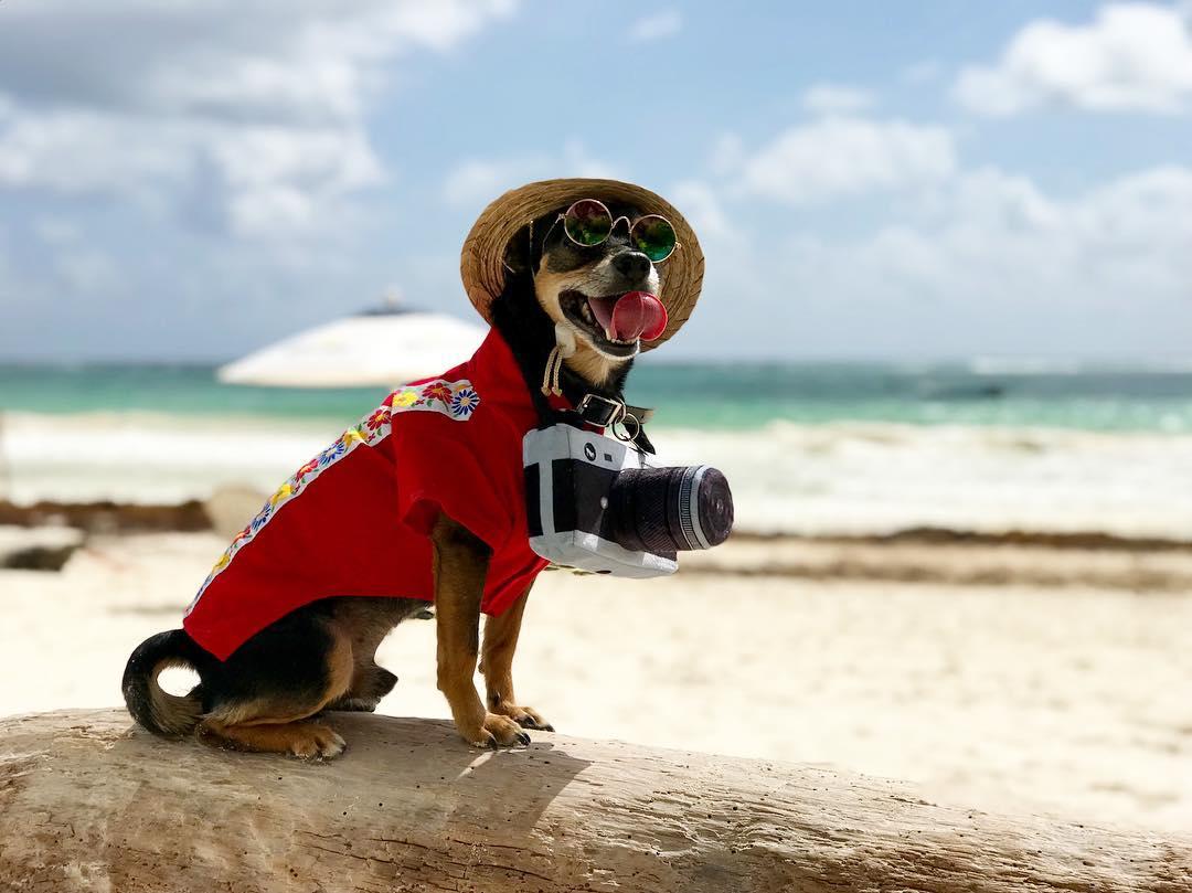 Chiquito Taquito  en la playa