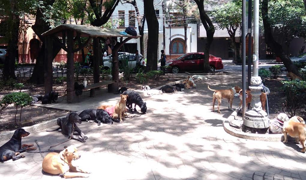 Parque México en la Colonia Condesa