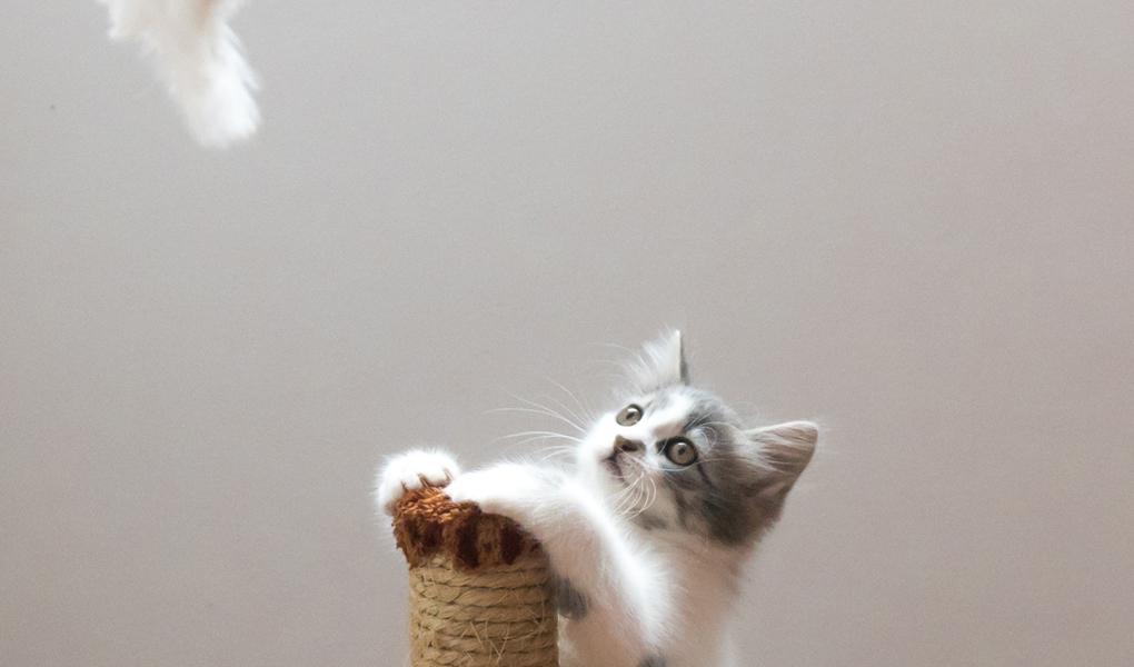 Gatito en su entorno de juego