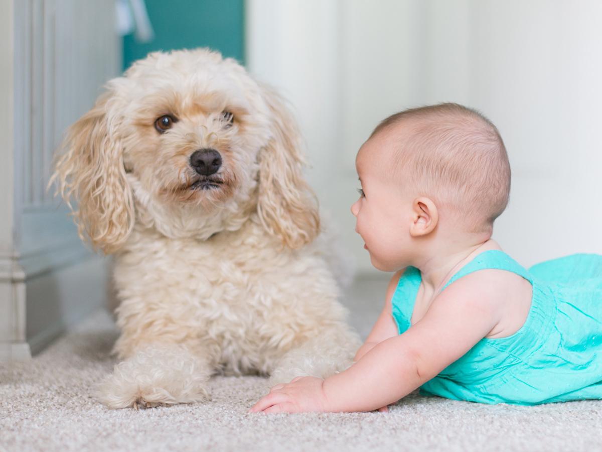 kids and dogs.jpg