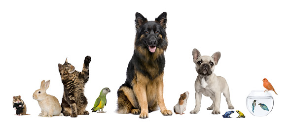 Animals Image.jpg