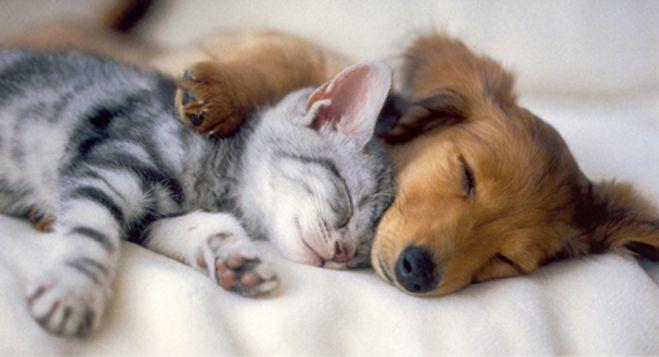 Dog & Cat Pic.jpg