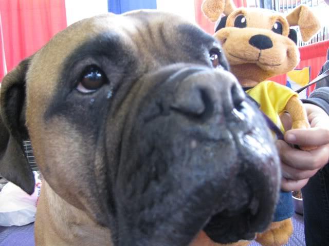 Pet Expo - Pic(Dog).jpg