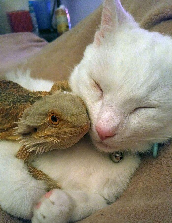 Reptile and Cat.JPG