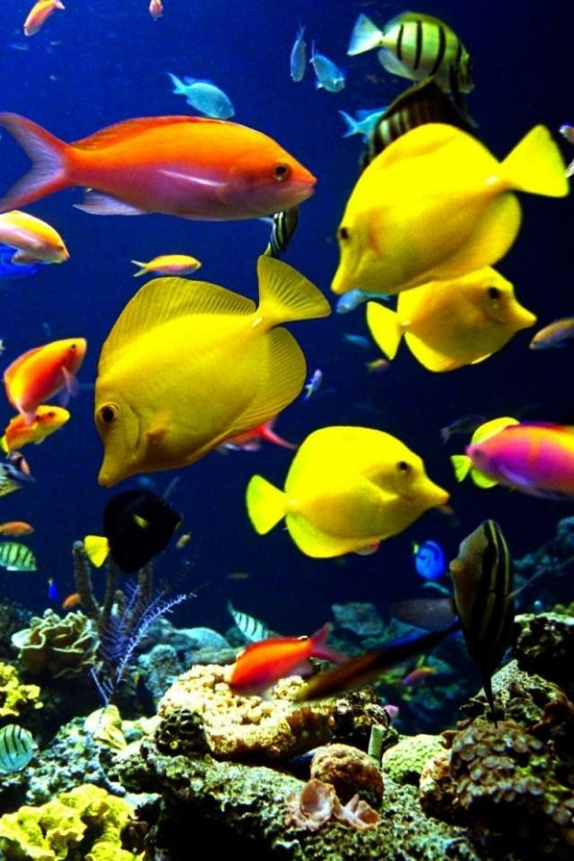 fish tropical.jpg