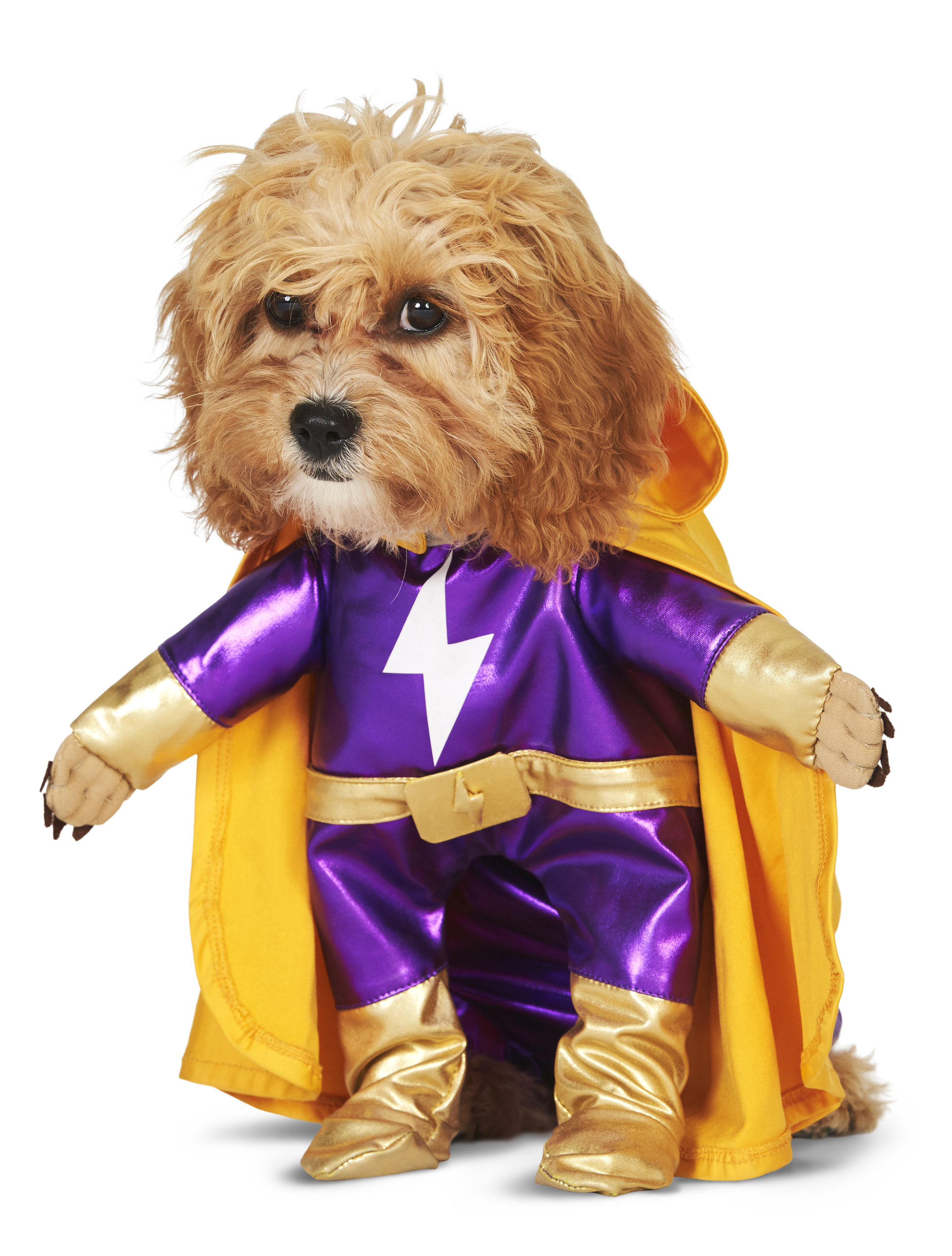 puppy-power_287940.jpg