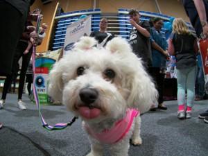 dog wellington.jpg