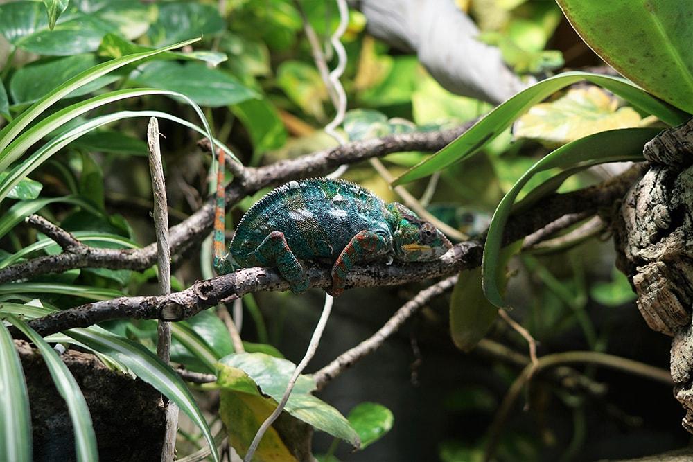 Apples ARkit chameleon