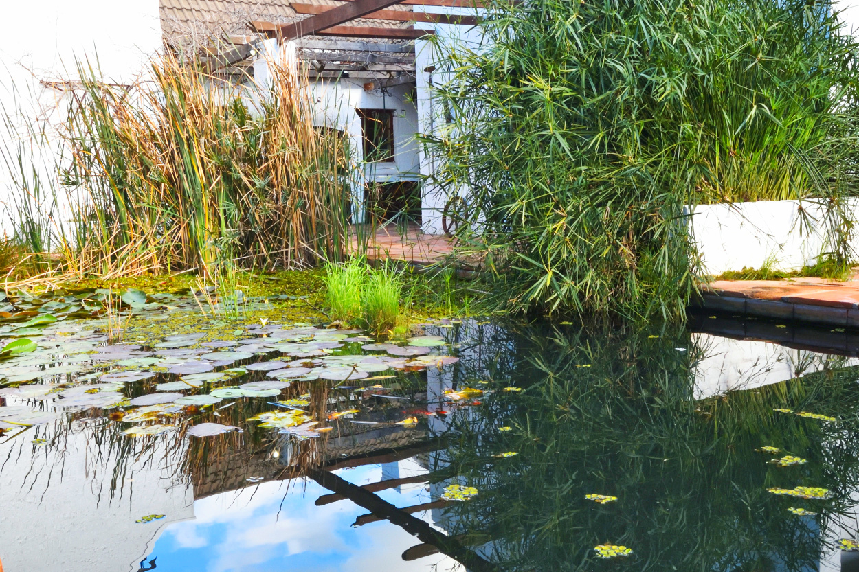 Pond at Chelaya Country Lodge in Somerset West