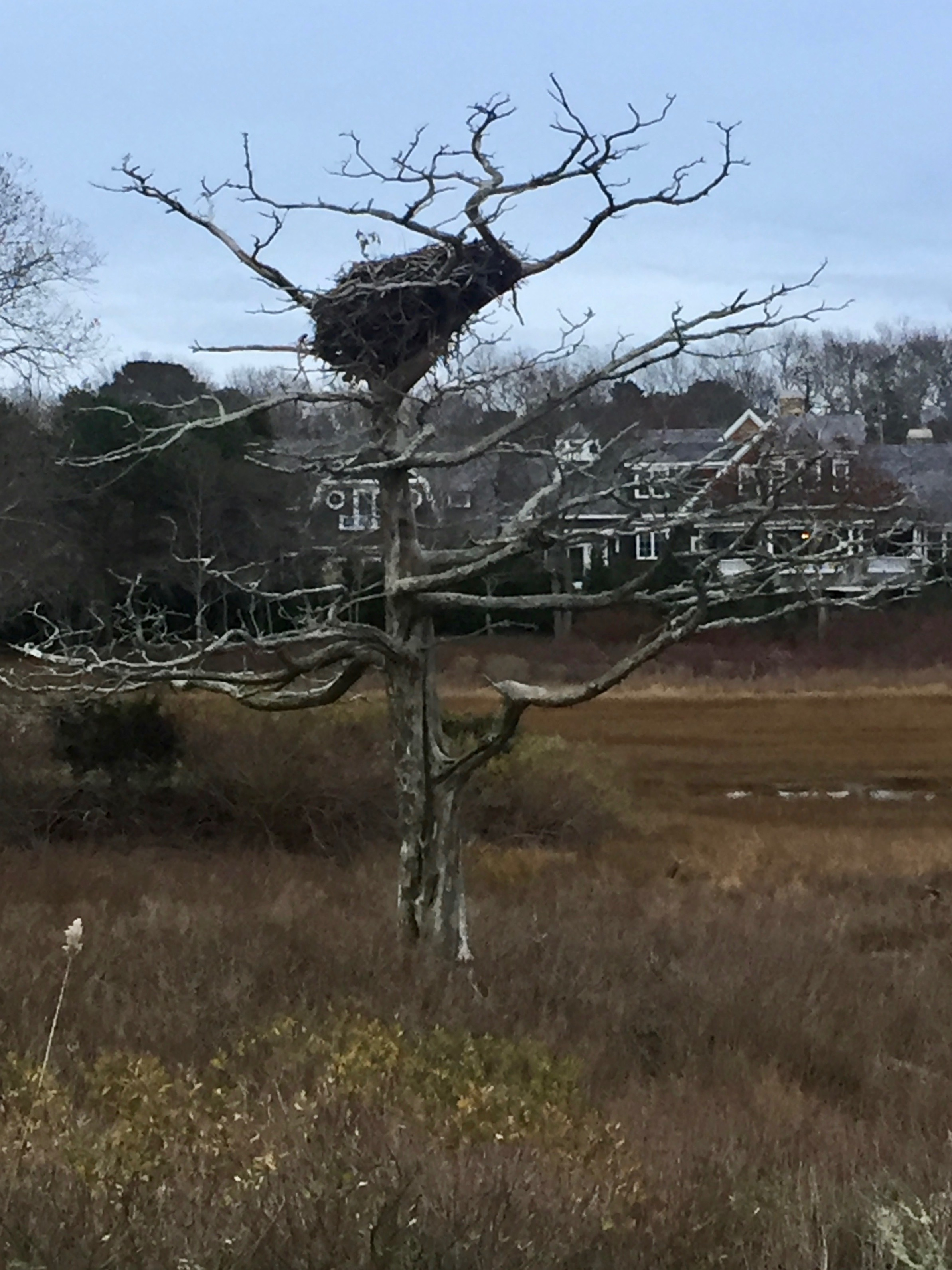 Osprey nest cape cod
