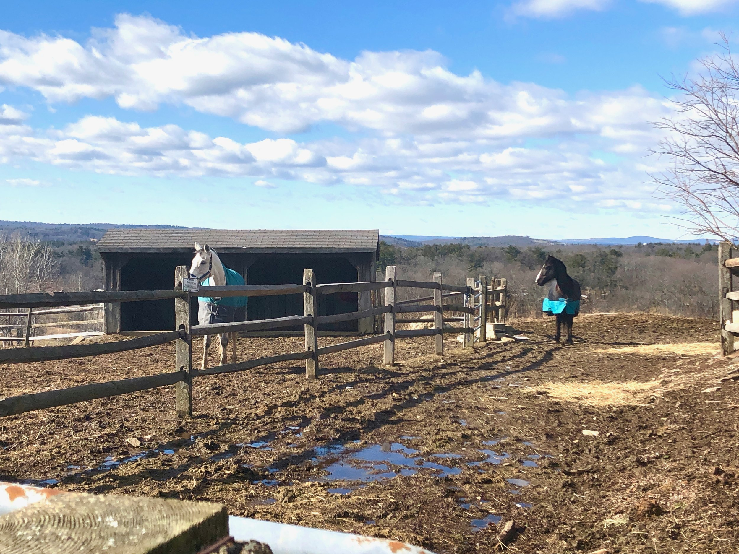 Horses enjoying the sun