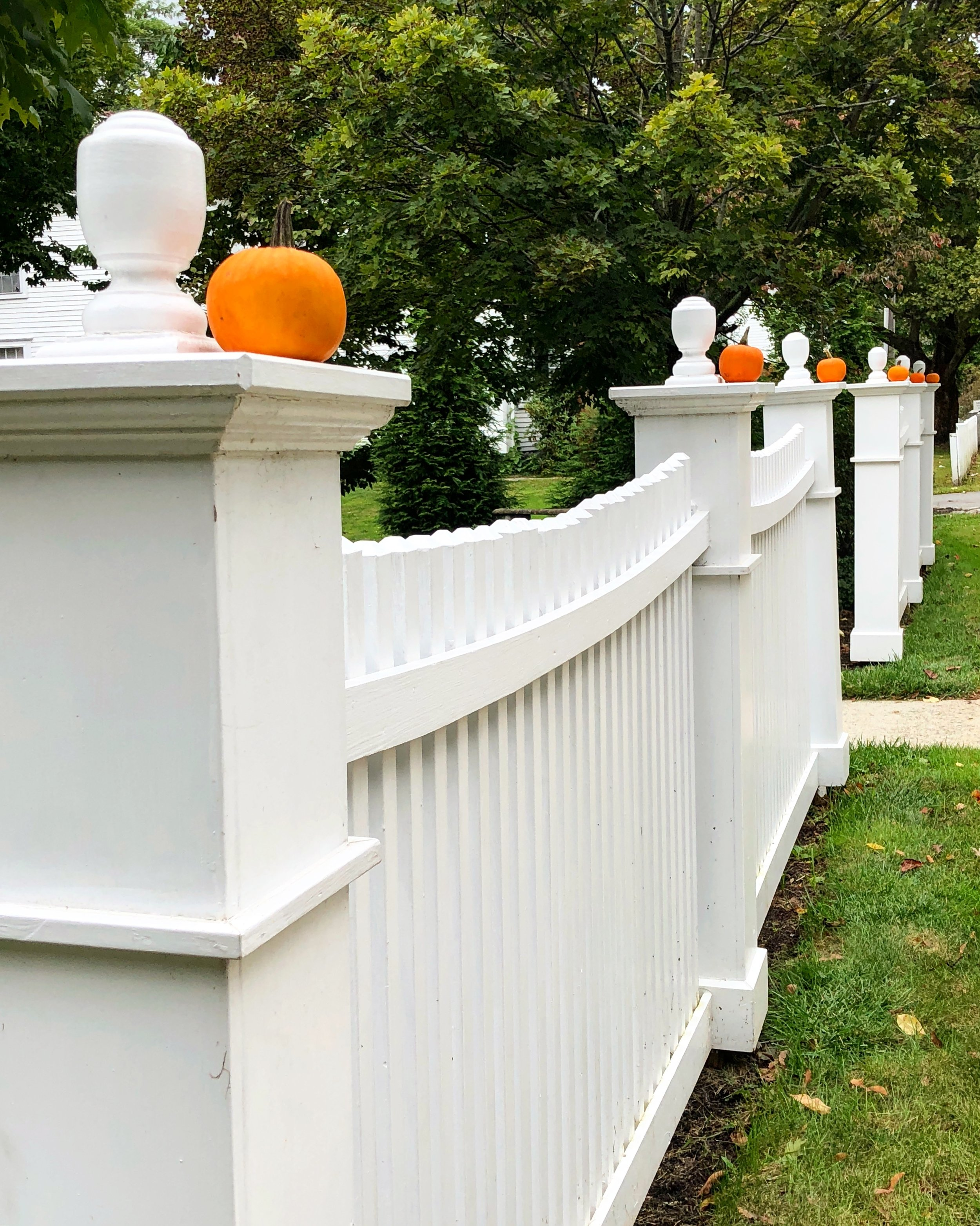 mini pumpkins on a white New England Fence