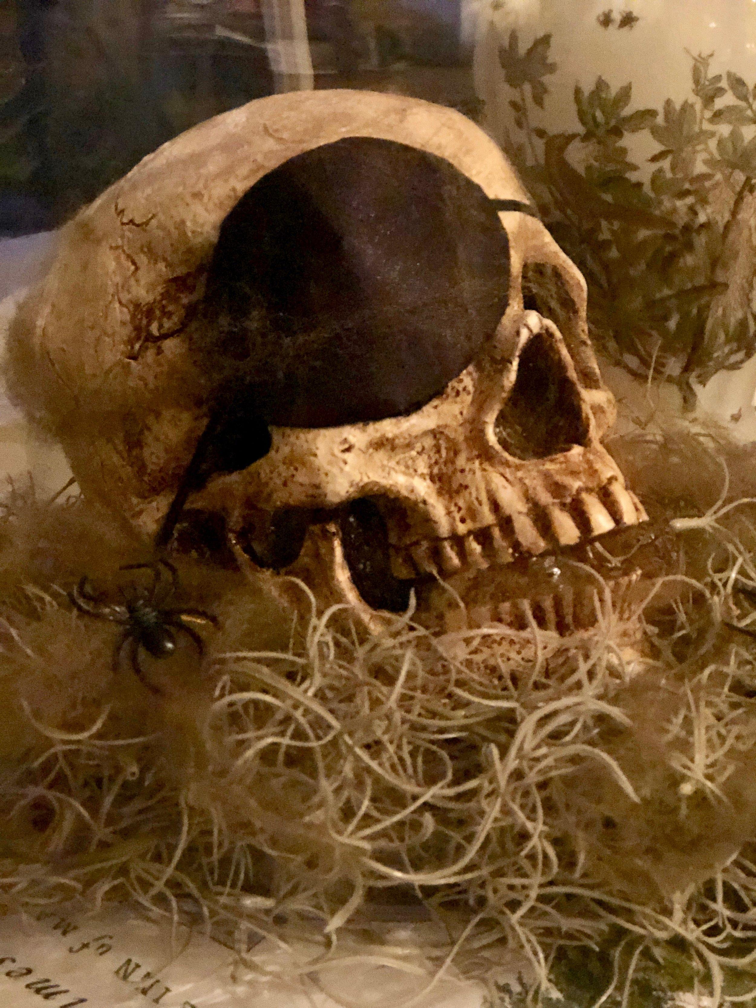 skull under glass for halloween