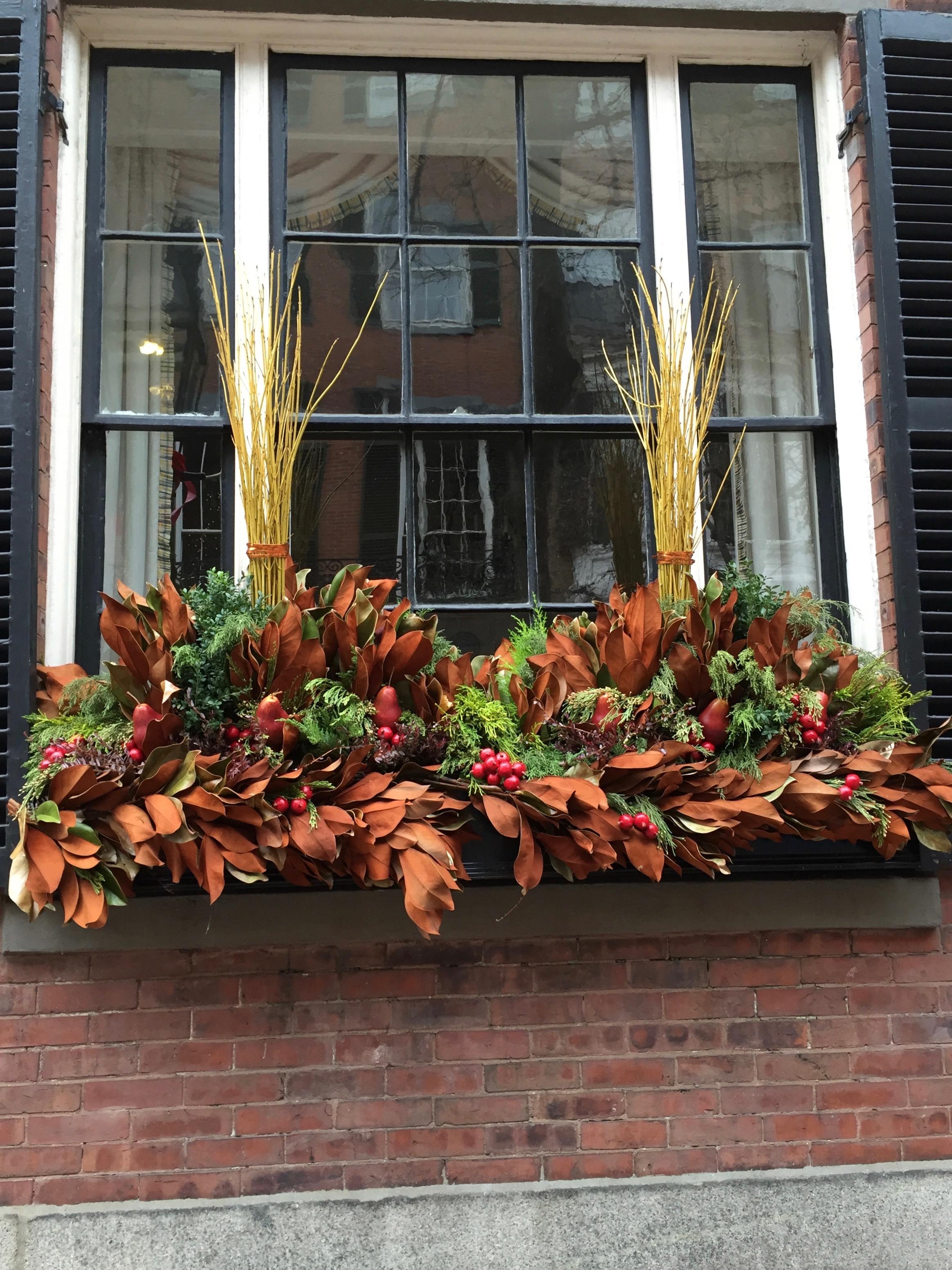 Christmas window box Beacon Hill Magnolia leaves