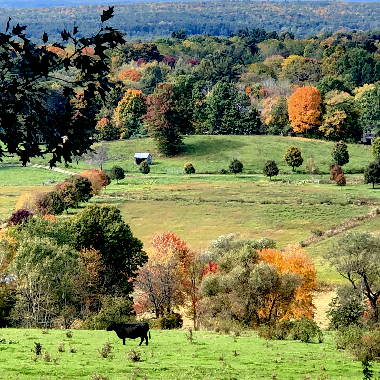 Gibbet Hill Groton, MA Classic New England in the fall