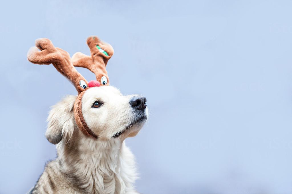 Christmas Dog.Christmas Dog Parade The Valley Evesham