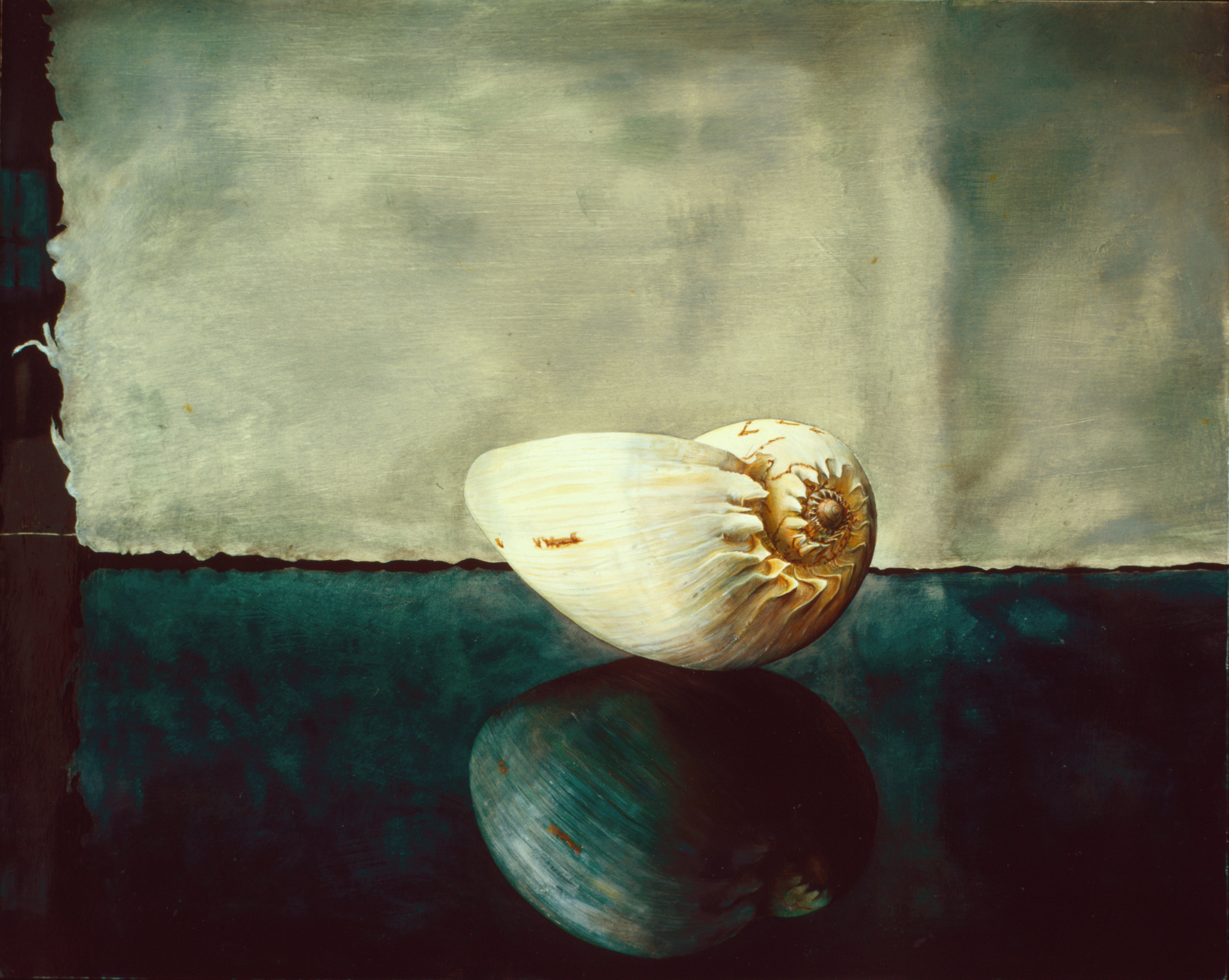 Portrait of a Shell