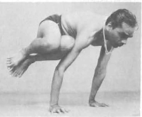 152-parsva-bakasana-yoga-pose-iyengar.jpg