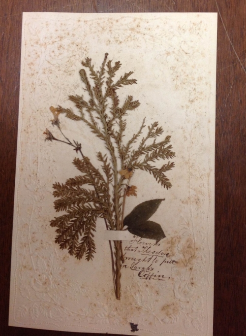 Flowers placed upon the coffin from the coffin of julia's sister Sarah in 1858. Alas, the provider of the flowers--one of her brothers--himself died soon afterwards, of typhoid. From the Quaker & Special Collections, haverford College.