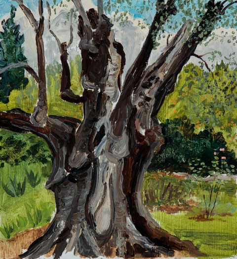 Ancient Olive Tree (SOLD)