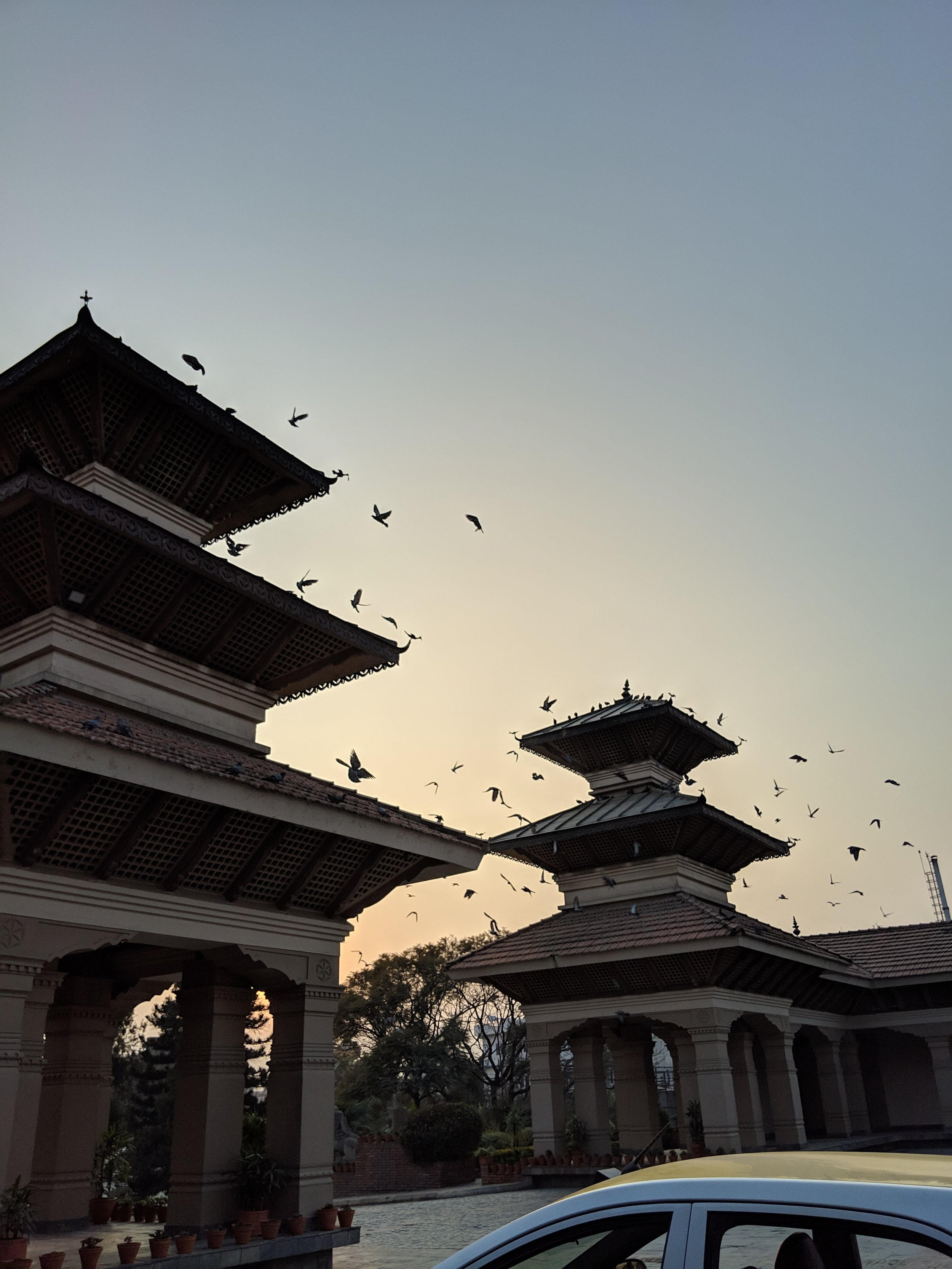 Some mornings in  Kathmandu the birds went crazy- we still don't know why!